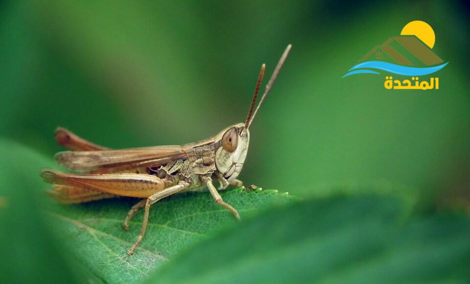 شركه رش لجميع الحشرات بالرياض